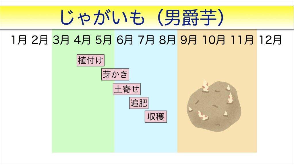 男爵芋の栽培管理表