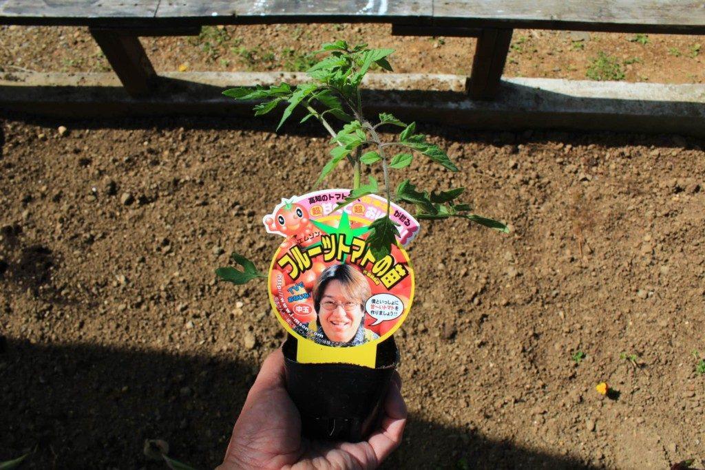 フルーツトマトをプランターで栽培する