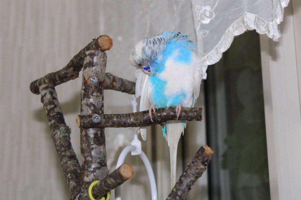 セキセイインコのピコちゃんのために自然木で作ったオモチャ