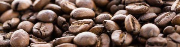 種 ロブスタ コーヒーの品種