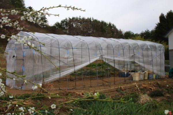 家庭菜園に最適なサイズのビニールハウスの作り方