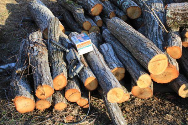 原木しいたけ「もりの金太郎」早生種を栽培してみる